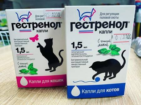Течка у кошек, сколько длится и как часто бывает, кошка во время первой течки | кошки - кто они?