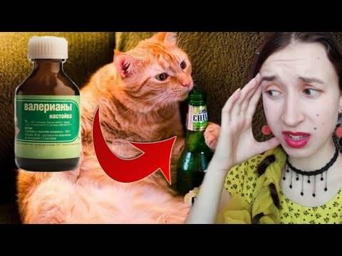 Валерьянка для кошек: как действует валериана в разных формах на животное, можно ли им ее давать?