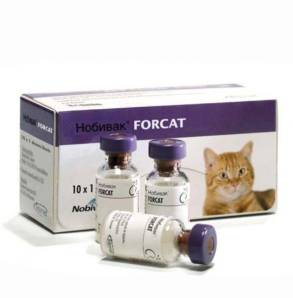 Нобивак для кошек