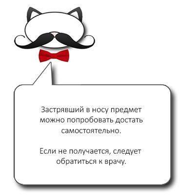 Лечение ринита (насморка) у кошек и котов: особенности, народные средства