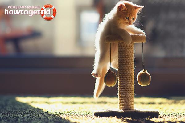 Как приучить кошку к когтеточке: все способы как это сделать