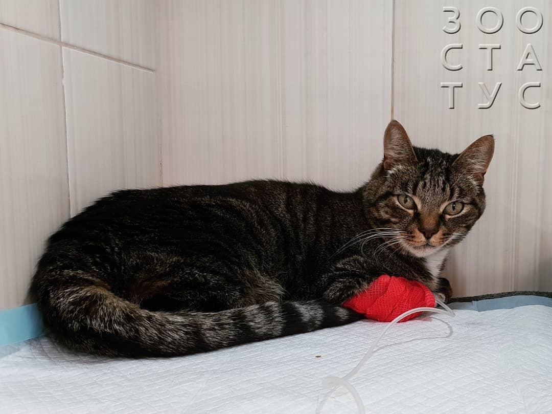 У кошки болят задние лапы – что это может быть и что делать, если животное хромает, хотя раны нет?