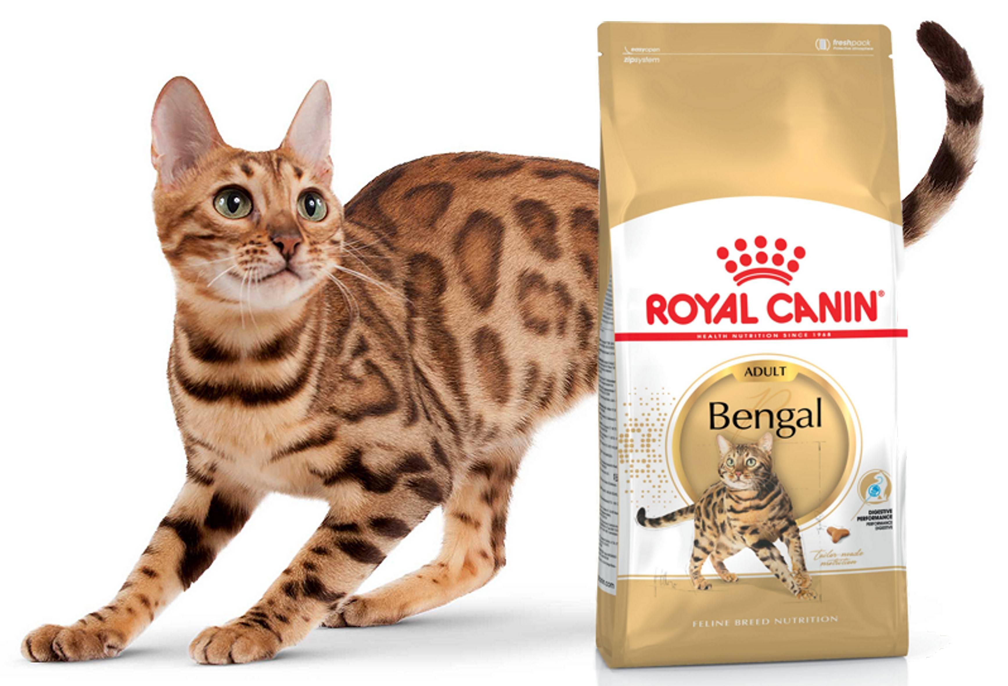 Гипоаллергенный корм для кошек премиум-класса и выше, сухой и влажный: чем кормить котов-аллергиков?