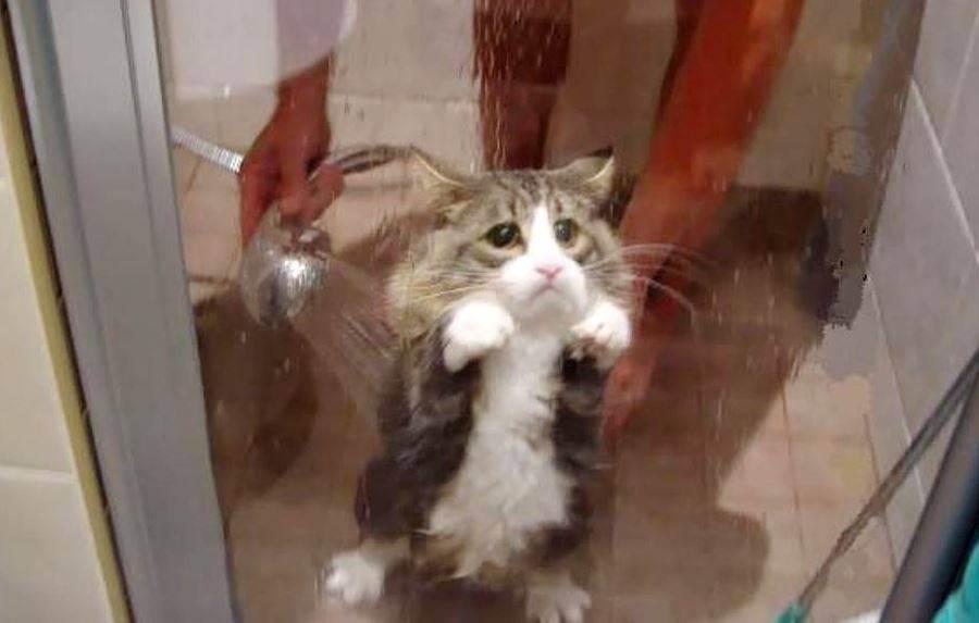 Как искупать кота: хитрости и советы