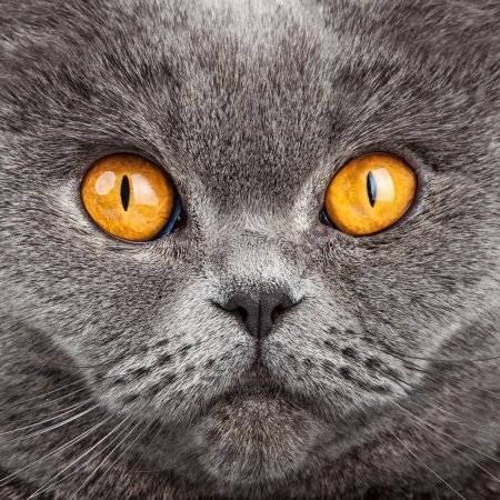 Tag archives: котенок в доме