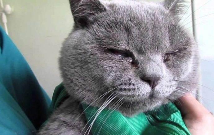 У кошки слезятся глаза, что делать