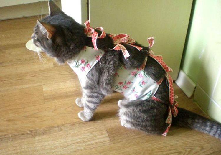 Как сшить и одеть попону для кошки