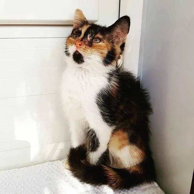 Трехцветная кошка в доме: приметы и их значение