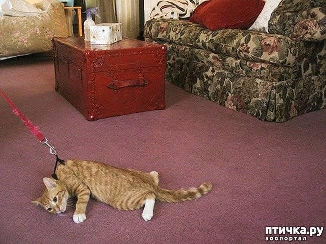 Что делать, если кошка загуляла первый раз