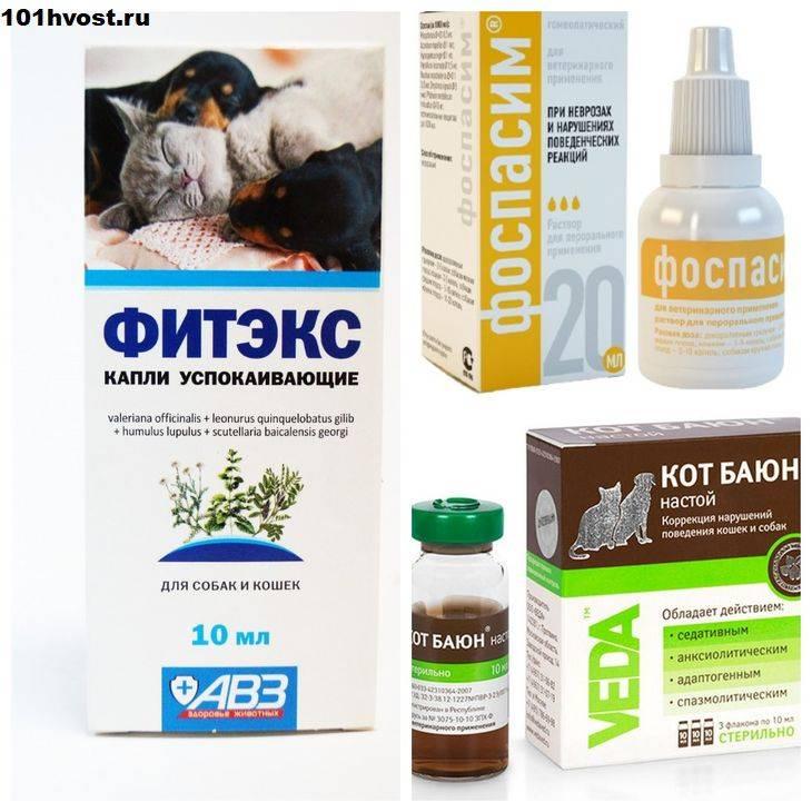 Фитекс для кошек: инструкция по применению и схема приёма препарата