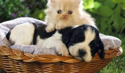 Кошки или собаки — как правильно выбрать питомца?