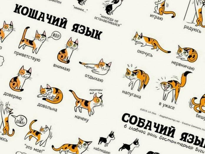 Как общаются кошки - способы общения (глаза, хвост, слух, голос и даже телепатия) | блог о домашних животных