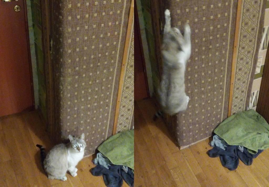 Ухищрения, как отучить кошку драть обои и мебель