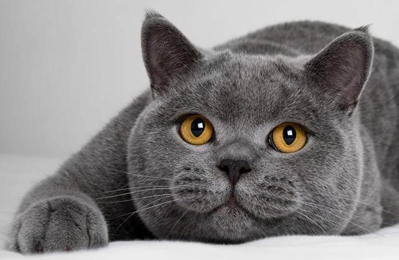 Беременность кошек: инструкция для хозяина