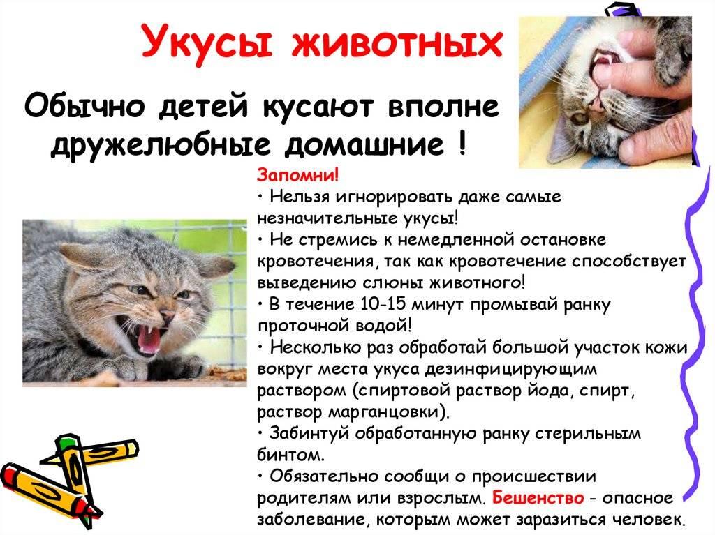 Укус кошки - опасно это или нет и первая помощь при укусе! | caticat.ru