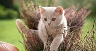 Почему кошка перестала ходить в лоток, и как исправить ситуацию: что делать?