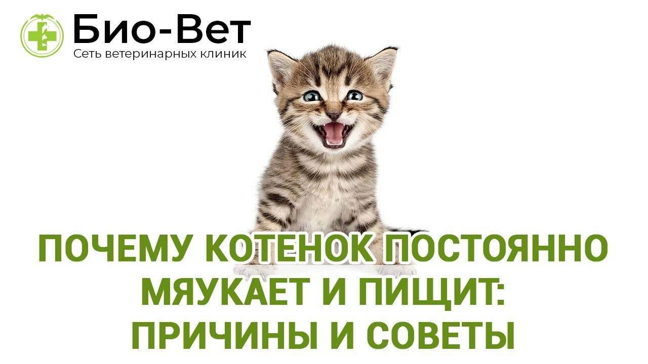 Почему кошка стала много есть?