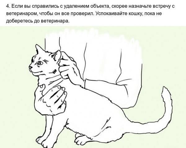 Чем можно помочь кошке, которая подавилась: застрявшая в горле косточка