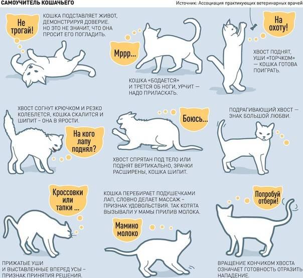Все что нужно знать о том, по каким причинам кошка может тряски своим хвостом