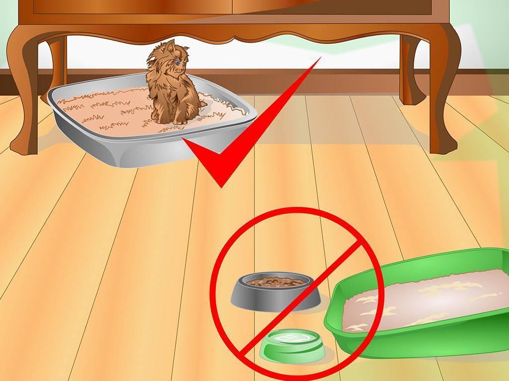 Как отучить кота гадить в неположенном месте: совет специалиста и народные средства