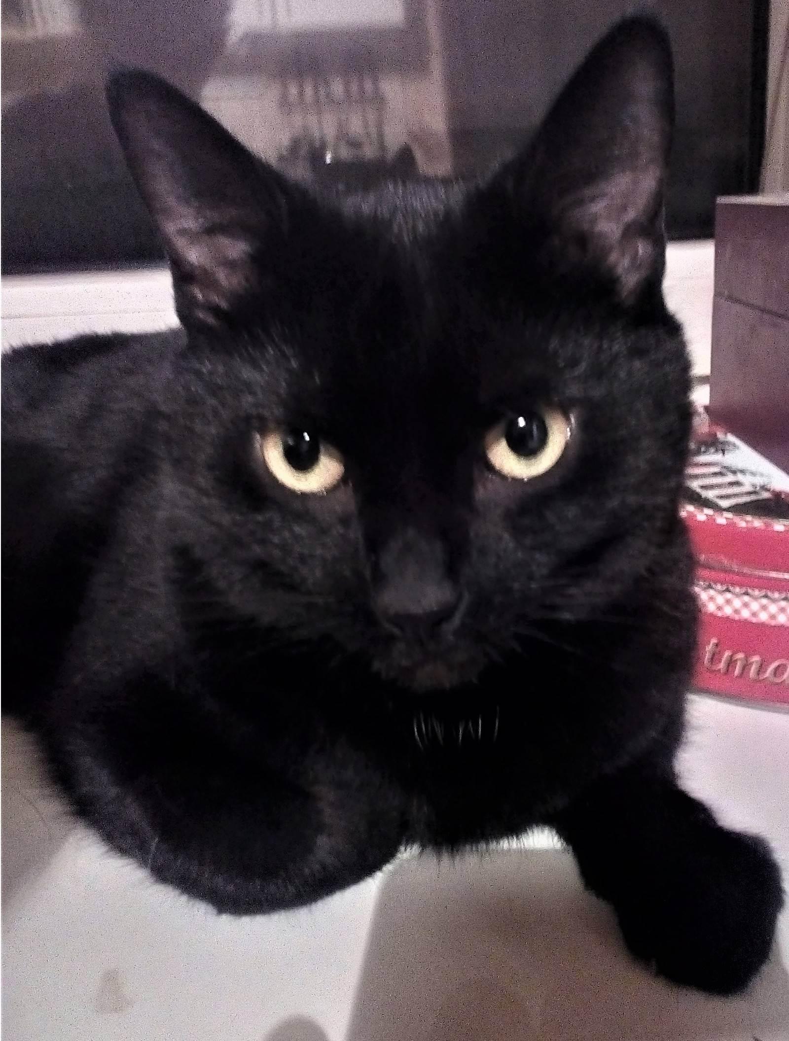 Пищевое отравление у кошек. что делать при отравлении кошки? симптомы и правильная помощь
