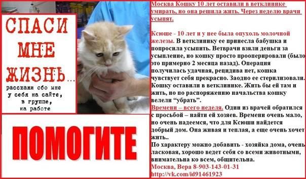 Усыпление кошек на дому в москве   эвтаназия кошек, котов от 1000 р
