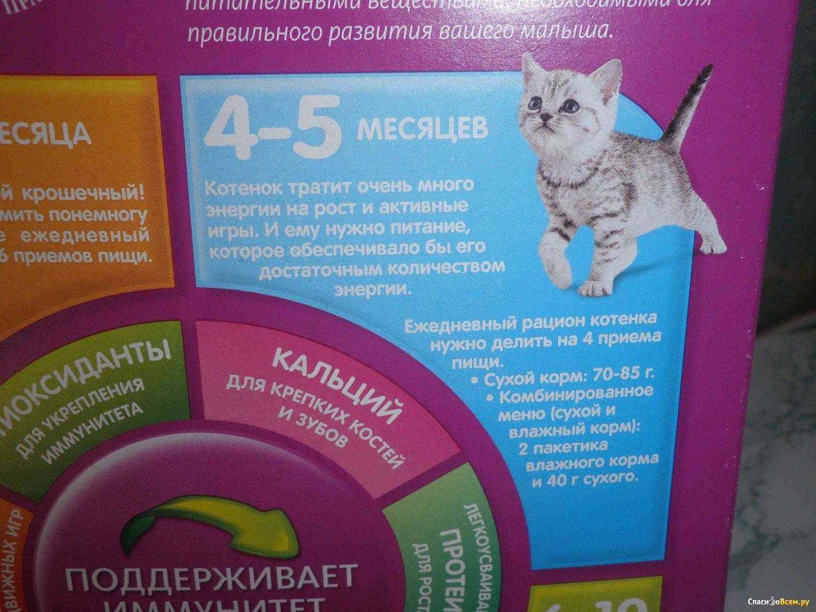Чем кормить котят британской породы?