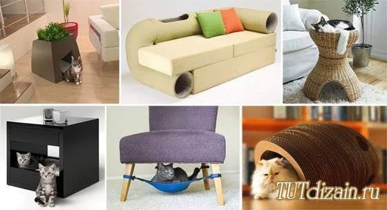 Хочешь дизайнерский дом – посоветуйся с котом
