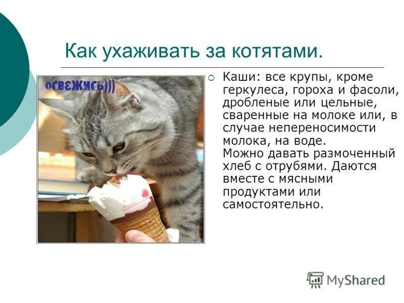 Правила ухода за котенком