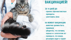 Как избавиться от блох у кошки или кота в домашних условиях
