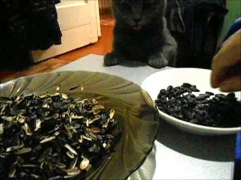 Можно ли семечки кошкам и другим животным