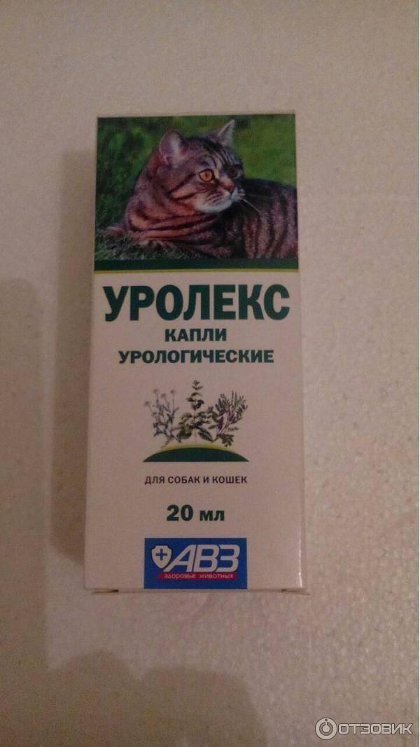 Мочекаменная болезнь у котов - симптомы, лечение в домашних условиях, препараты, профилактика