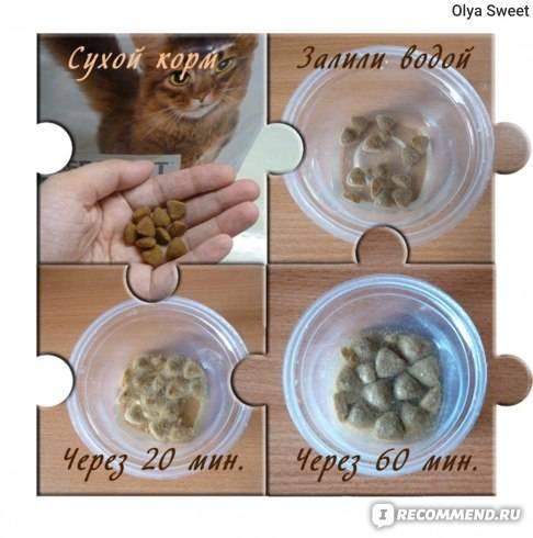 Как приучить котенка к сухому корму: советы как приучить котенка к сухому корму: советы