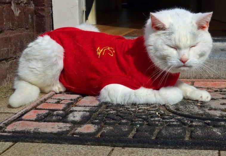 Мерзнут ли кошки зимой