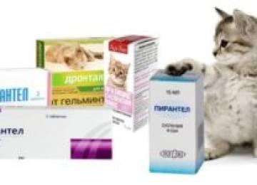 Как дать кошке таблетку от глистов: основные правила