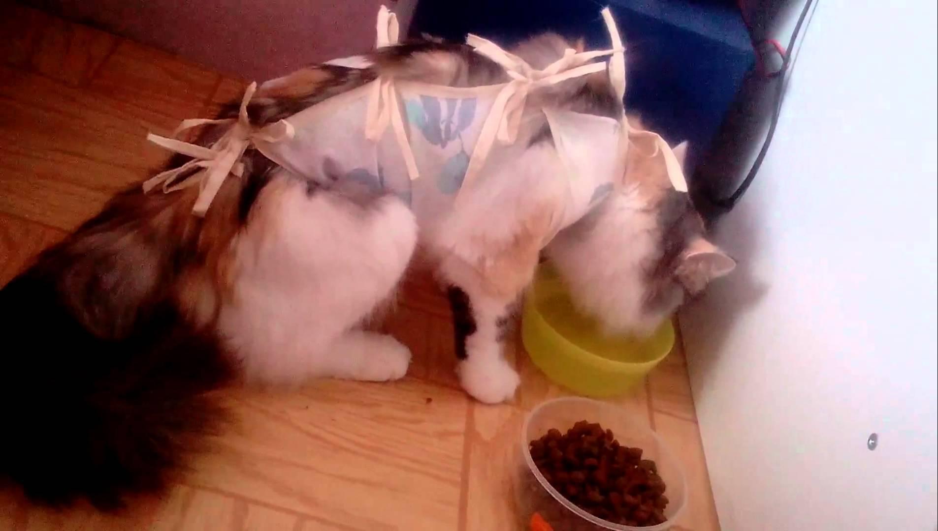 Кошка после стерилизации: уход за швом и советы ветеринаров