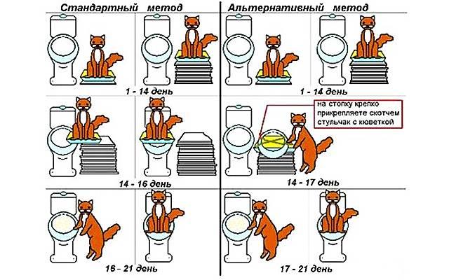 Как приучить кота к унитазу в домашних условиях: инструкция по приучению животного к туалету