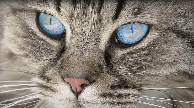 Почему кошка рычит, кусается и шипит без причины