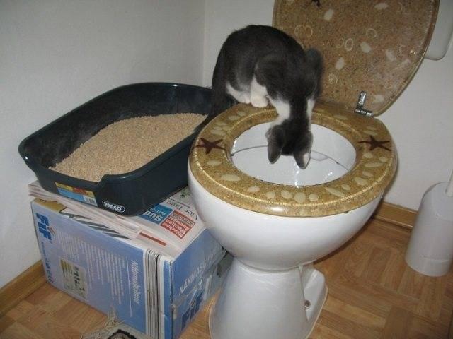 Как приучить котёнка к лотку - лайфхакер