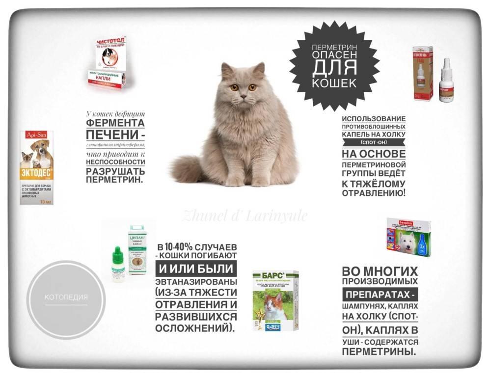 Что делать при отравлении кошки? симптомы и правильная помощь