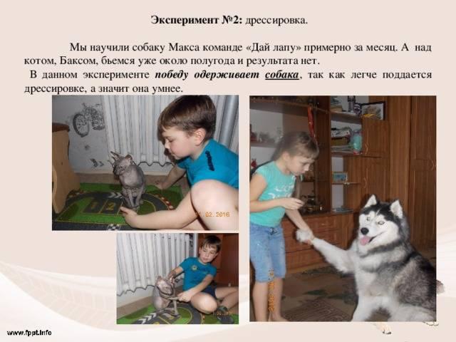 Как научить кота командам: давать лапу, приносить игрушку, ходить на задних лапах    учим кошку выполнять 8 команд маленькие секреты и хитрости