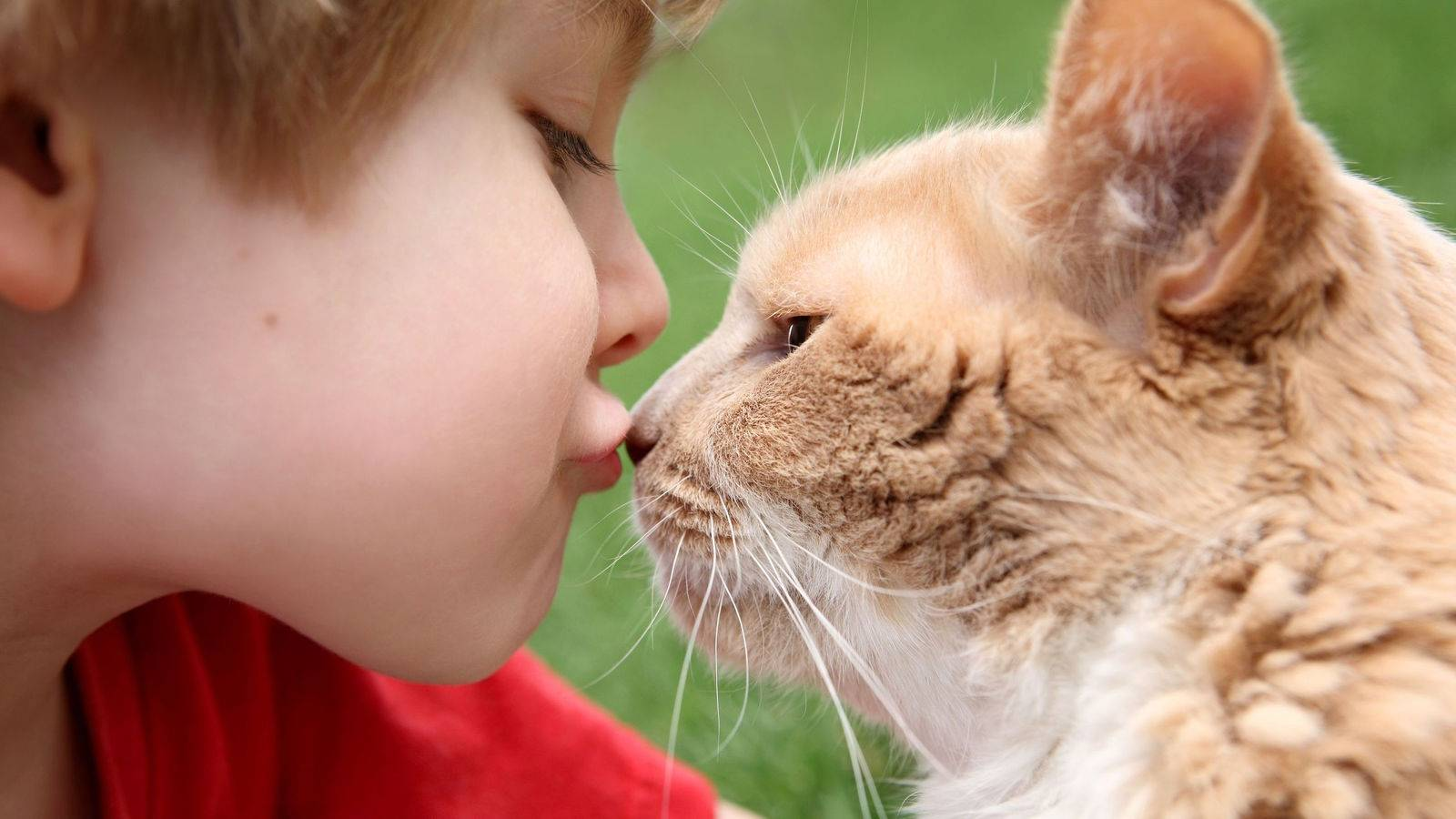 Почему кошки обнимаются с людьми, собаками и игрушками