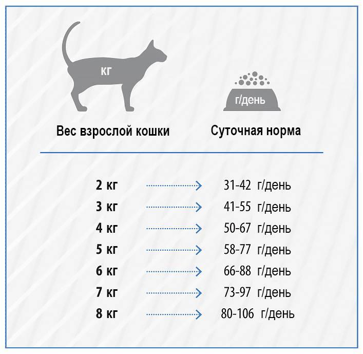 Вес котенка по месяцам: таблица (средние показатели и значения для популярных пород), нормы прибавки, правила взвешивания питомца
