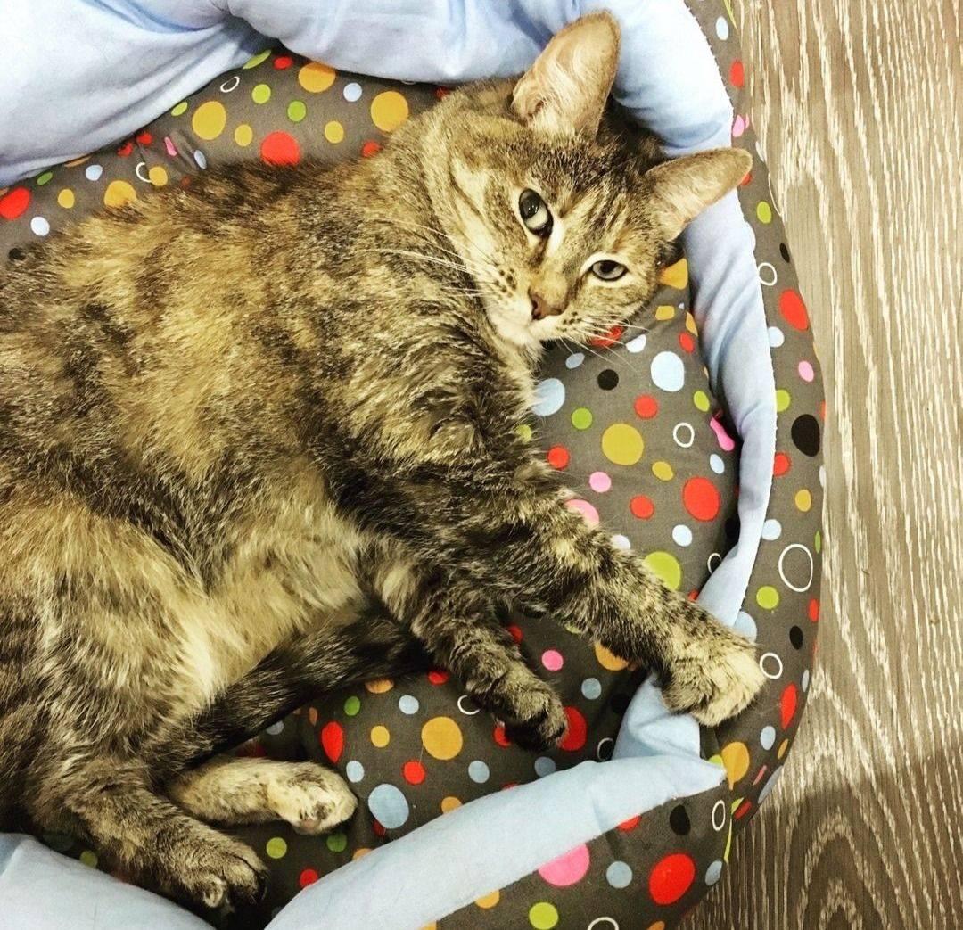 Правильное питание - залог здоровья кошки