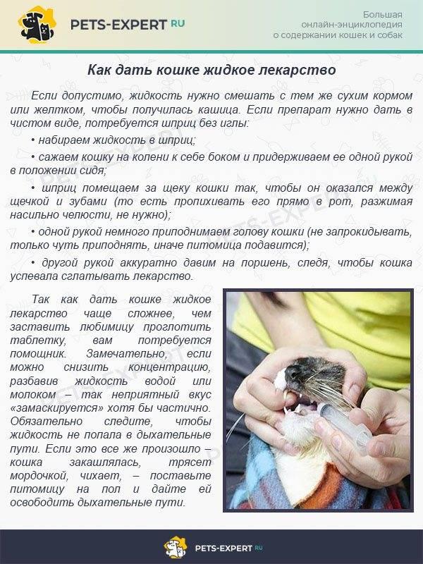 Как дать кошке таблетку от глистов правильно (видео) - все нюансы и хитрости!   caticat.ru