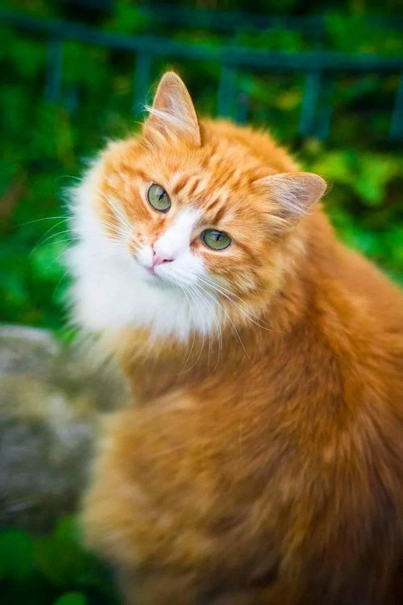 Кошка с зелеными глазами. приметы и поверья о чёрных котах. негативные приметы, связанные с образом кота тёмной масти