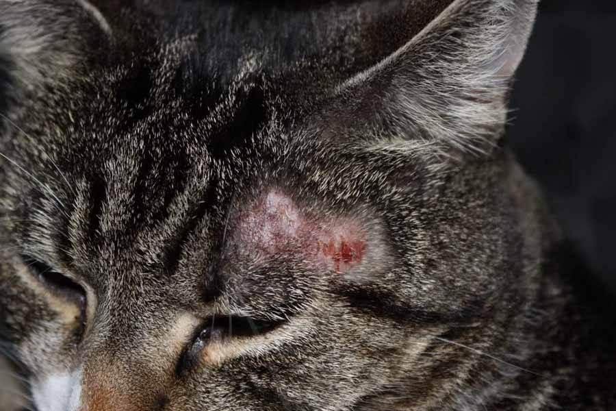 Недуги, подстерегающие пушистых питомцев: признаки и лечение
