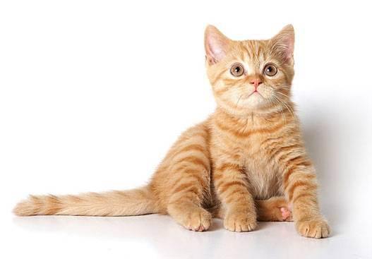 Как назвать котенка мальчика - подборка кличек на все случаи жизни