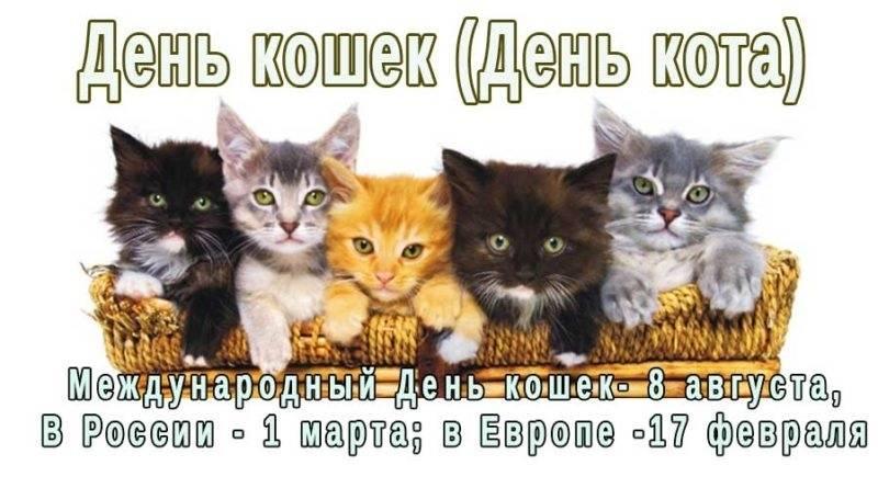 Всемирный день кошек и котов в 2018 году