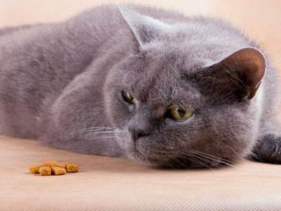 Кошка не ест: причины, возможные болезни, рекомендации | ветеринарная служба владимирской области